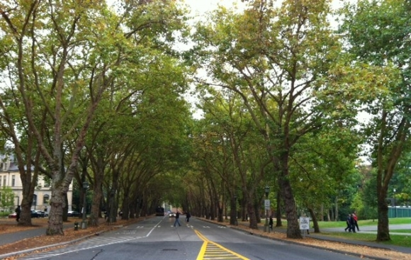 university of washington street